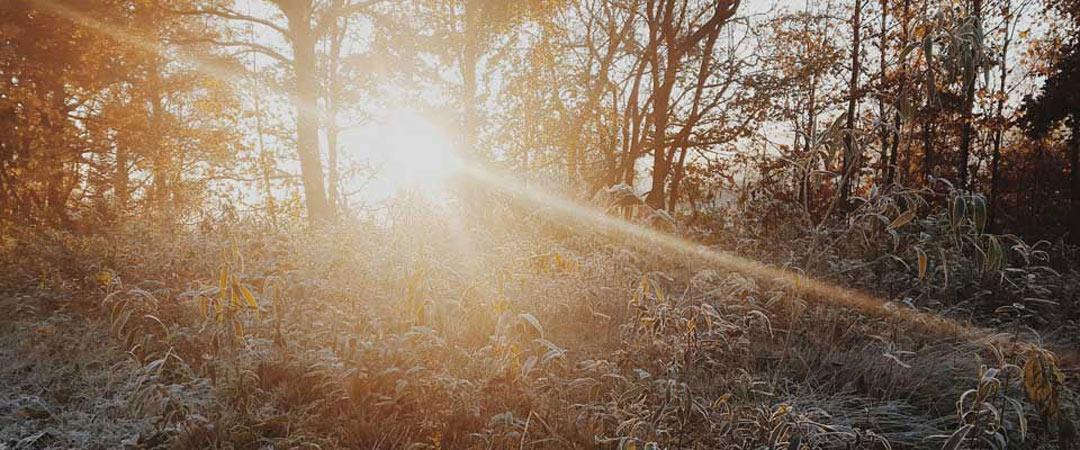 Sun beam shinning through trees