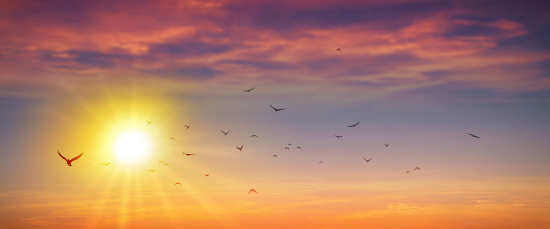 Birds flying through a sunset
