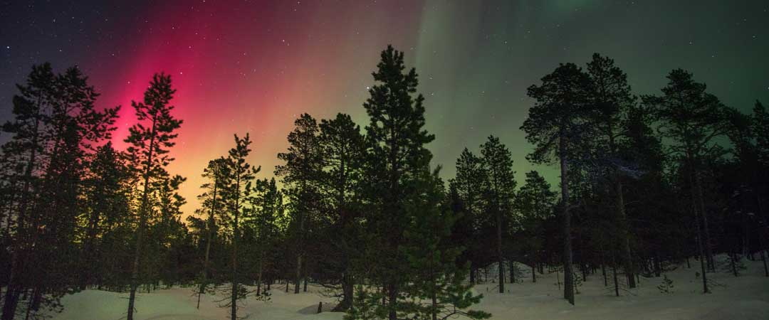 Tree line skyline with a colorful sky