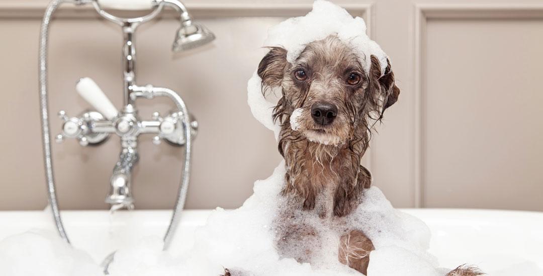 Cute dog in bubble bath